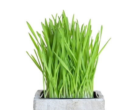 government sidebar grass